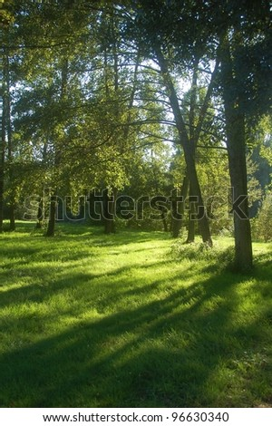 Fresh green grass growing in a forest on the boarder of river Sarthe in France.