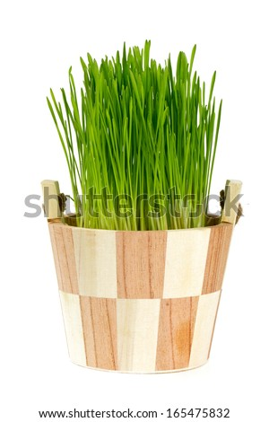 fresh green grass in a sauna bucket isolated on white