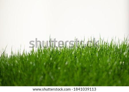 fresh green grass in foreground isolated on white background Stock photo ©