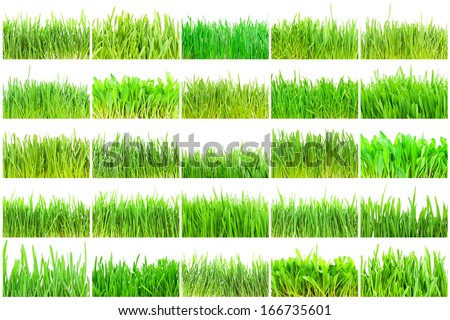 Fresh green grass isolated on white background - Shutterstock ID 166735601