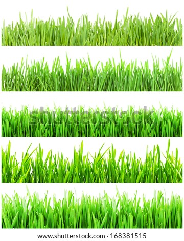 Fresh green grass isolated on white background - Shutterstock ID 168381515