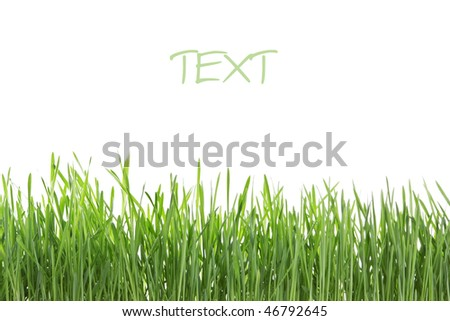 stock-photo-fresh-green-grass-isolated-on-white-background-46792645.jpg