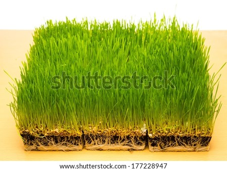 Fresh green grass on a table