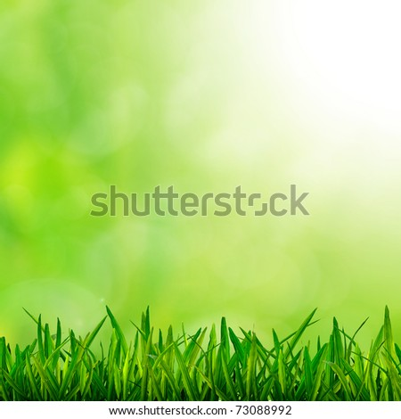 Fresh green Grass on fresh background