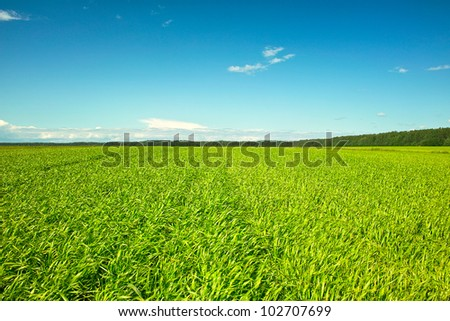 Fresh green grass on sunny field, blue sky with light white clouds