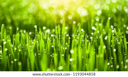 Fresh green grass with dew drops in sunshine on auttum. Abstract blurry background. Nature background. Texture. #1193044858