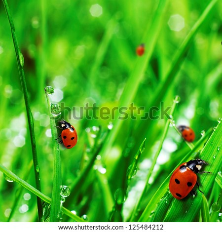 fresh green grass with water drops and ladybugs close up #125484212