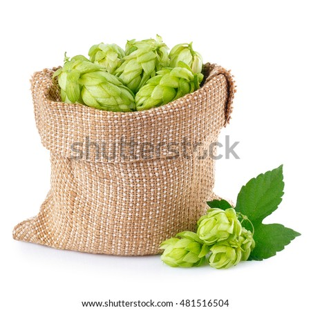 Shutterstock Fresh green hops in burlap bag with branch near isolated on white background. Hop cones isolated on white. Hop for beer in burlap bag. Sack of fresh hops isolated on a white background.