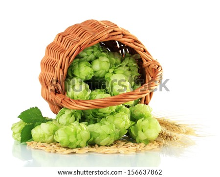 Fresh green hops in wicker basket and barley, isolated on white