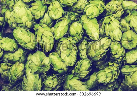 Shutterstock Fresh green hops on a wooden table. Blue toned