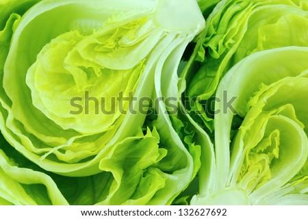 Fresh Green Iceberg lettuce .