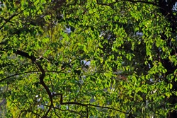 fresh green in a garden with sunlight