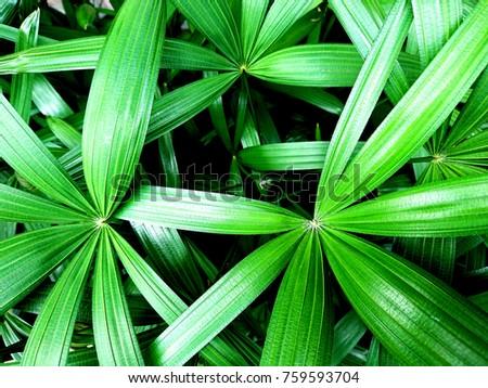 Fresh green leaf as background