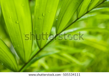 Fresh green leaf backgrounds. Shallow depth of field  - Shutterstock ID 505534111