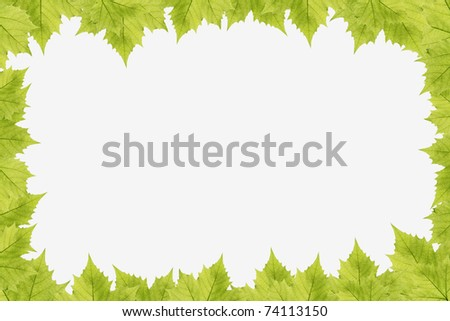 Fresh Green Leaf Border on Isolated White Background