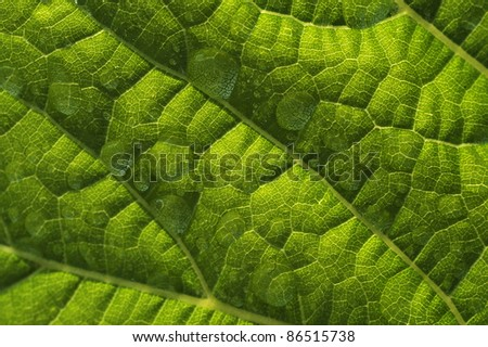 fresh green leaf close up