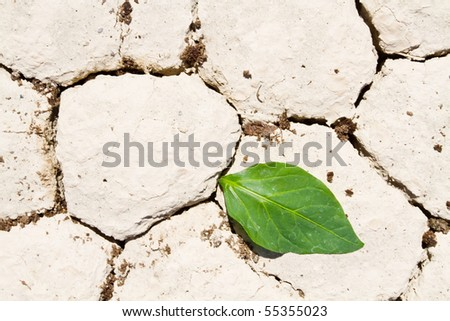 Fresh green leaf coming out from cracked ground