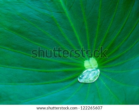 Fresh green leaf fragment with one big water drop, rain drop on a green leaf background, green texture, rain water drop on the leaf