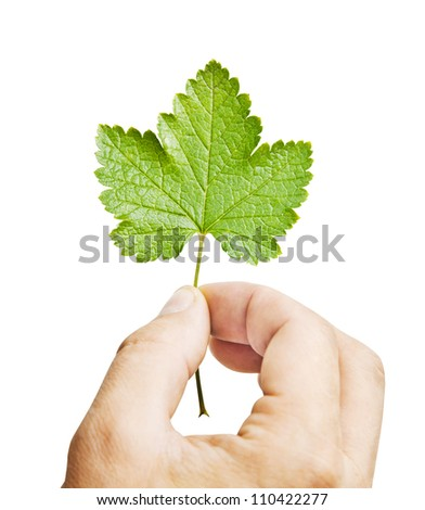 Fresh green leaf in hand, isolated on white