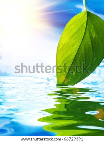 Fresh green leaf reflected in blue water