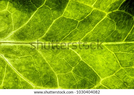 Fresh green leaf rugged structure extreme macro closeup photo with midrib parallel to the frame and visible leaf veins and grooves as a natural texture eco green biology background.