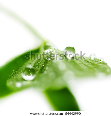 fresh green leaf with water drop