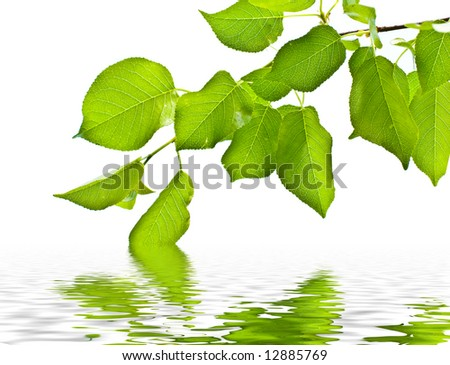 fresh green leafs over water
