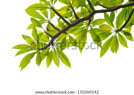 Fresh green leaves and branches on white background