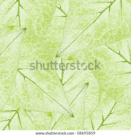 fresh green leaves border background