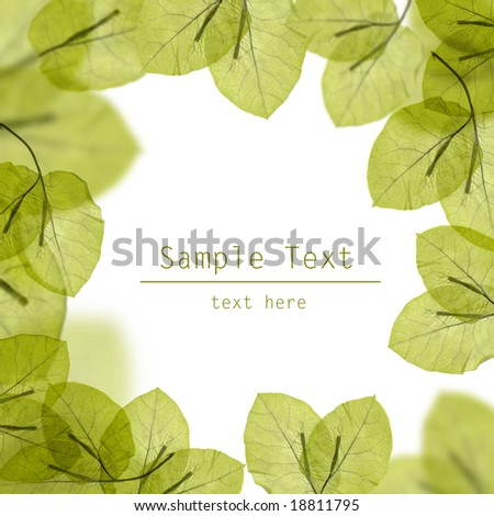 fresh green leaves border on white background