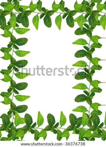 fresh green leaves frame - similar images available
