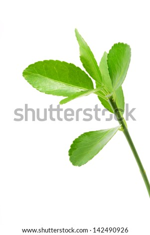Fresh green leaves isolated on a white background