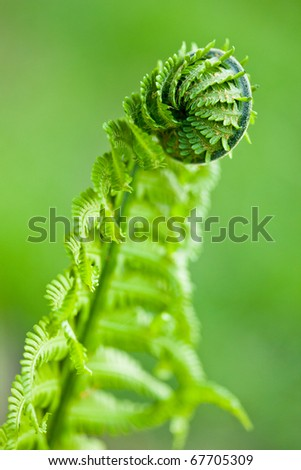 Fresh green leaves of a fern in the blurry background