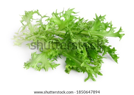Fresh green leaves of endive frisee chicory salad isolated on white background with clipping path and full depth of field Foto stock ©