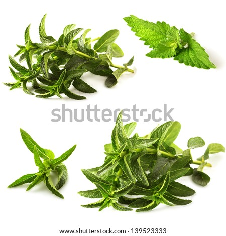 Fresh green leaves of melissa and peppermint isolated on white background