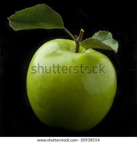 fresh green leaves of the apple tree