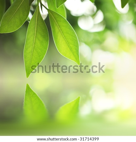 Fresh green leaves over water surface - stock photo