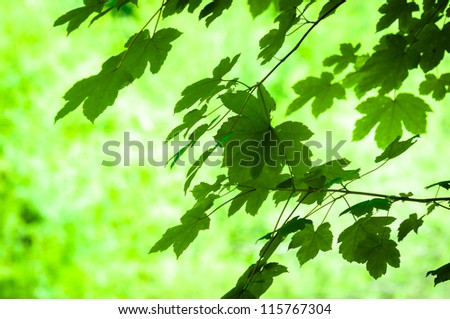 Fresh green leaves with blurry background
