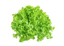 Fresh green lettuce isolated on white background.