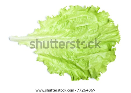 fresh green lettuce leaf isolated on white