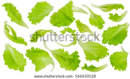 Fresh green lettuce leaves isolated on white background #566650528