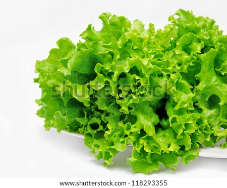 Fresh green lettuce on the plate  isolated