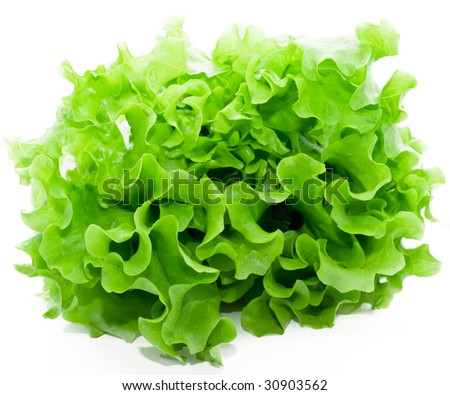 Fresh green Lettuce salad on white isolated background