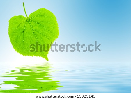 Fresh green lime tree leaf is reflecting in the water
