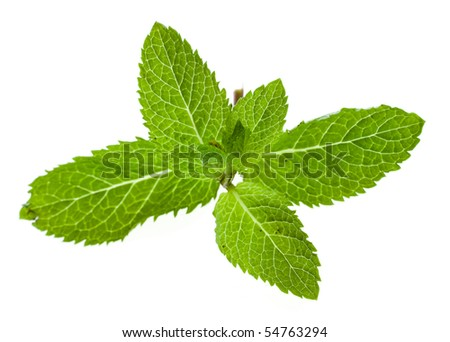 Fresh green mint close up isolated on white background