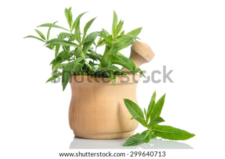 Fresh green mint in wooden mortar on white background #299640713