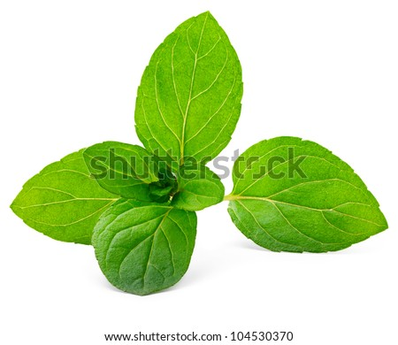 Fresh green mint isolated on white