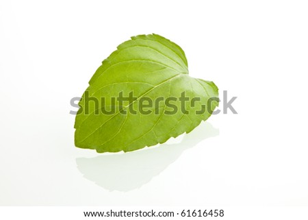 Fresh green mint leaf isolated on white background - stock photo