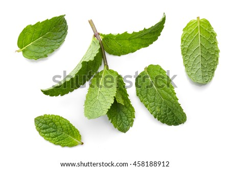 fresh green mint leaves isolated on white background, top view #458188912