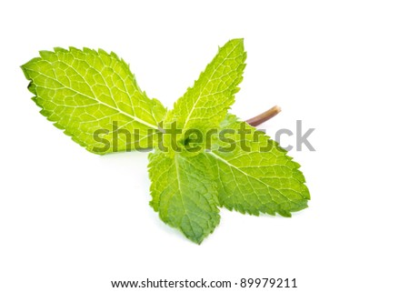 fresh green mint leaves on a white background - stock photo